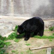LA Zoo Bears