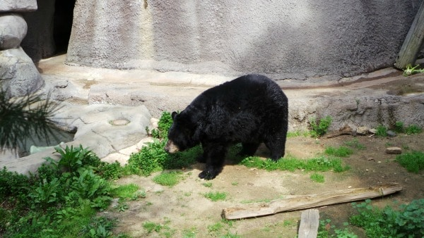 Tigers, Monkeys and Bears at The LA Zoo