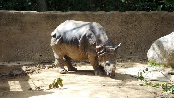 The LA Zoo
