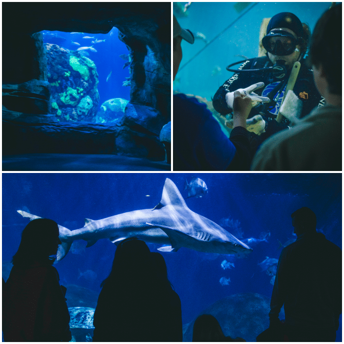 -Tennessee Aquarium Chattanooga