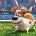 Bring The Secret Life of Pets Home #TheSecretLifeOfPets