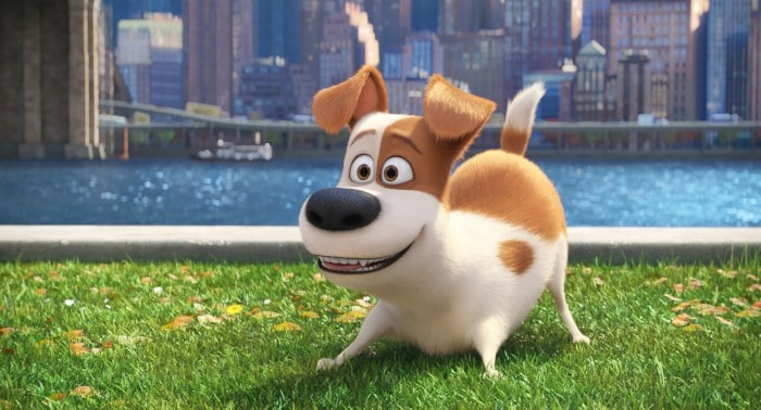 The Secret Life of Pets - Max - Digital HD DVD