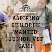 Junior Vet Camp 2017