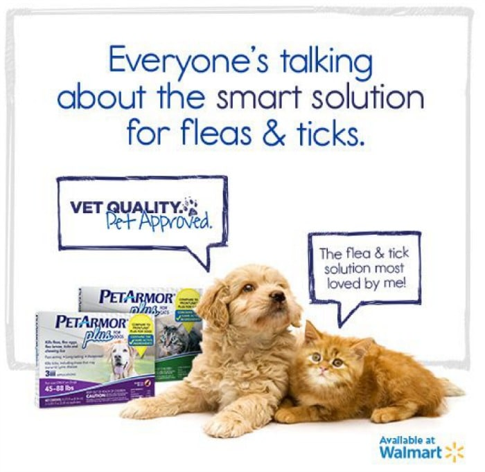 proactive about fleas