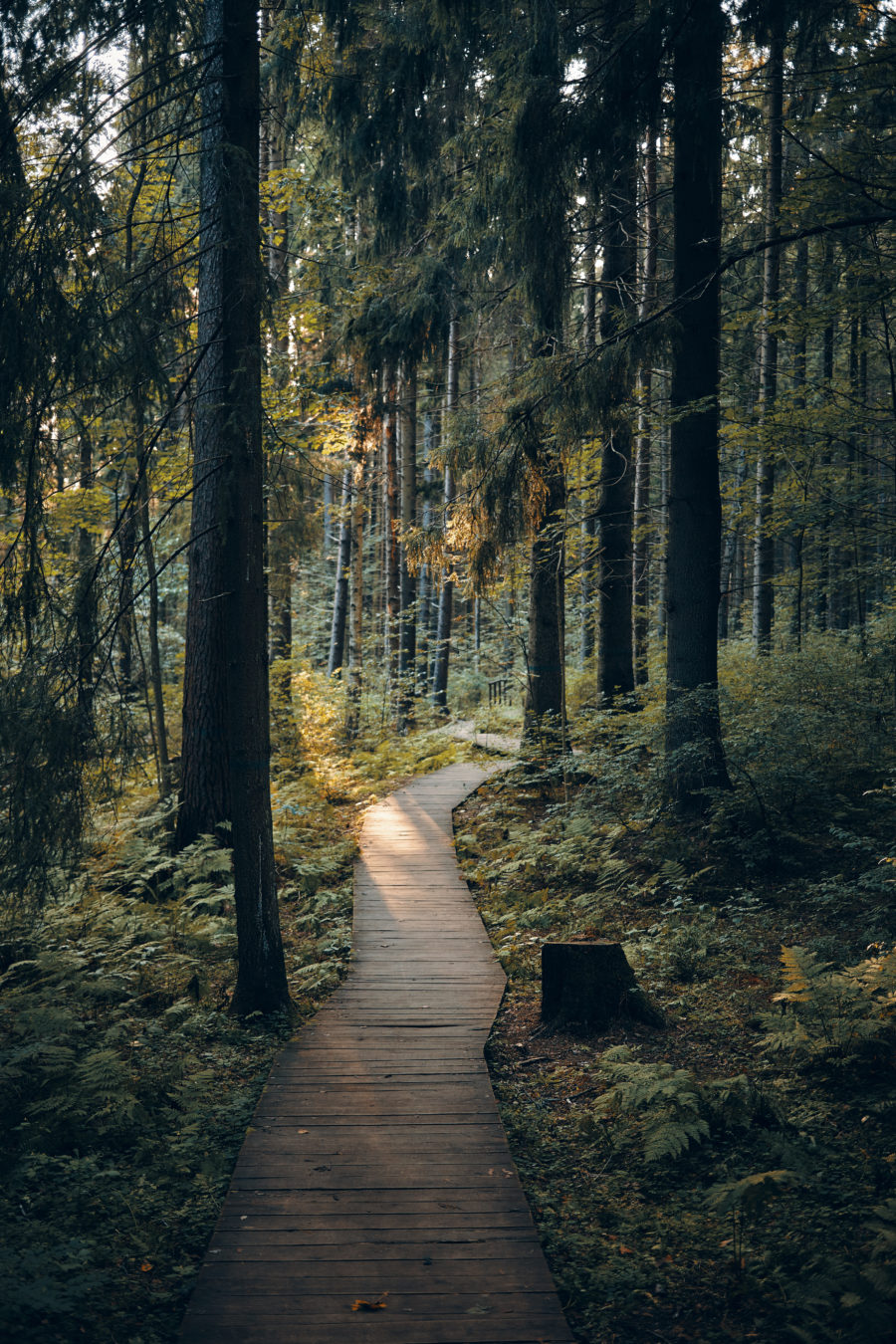 hiking path in the woods