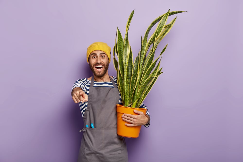 Why It's Important to Add Indoor Plants to Your Home