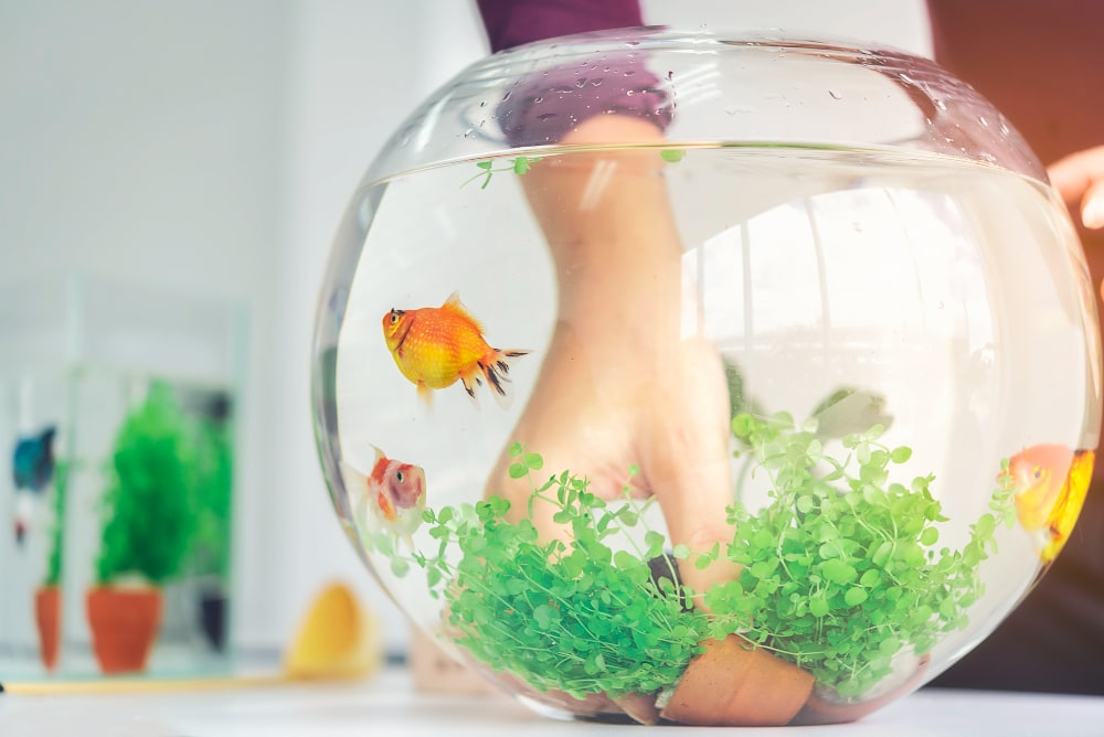 Guide To Help You Buy Suitable And Unharmful Fish Tank Accessories